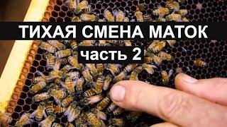 Пасека #28 Тихая замена матоk часть 2 Пчеловодство вывод матоk