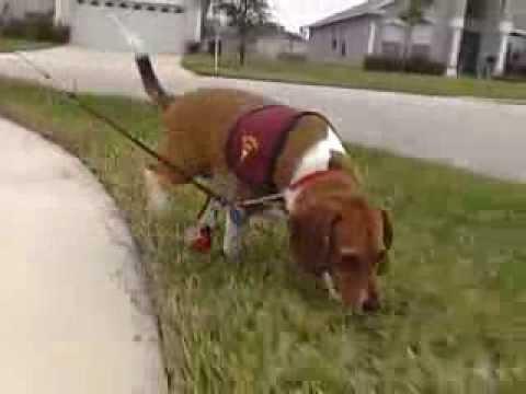 911-diabetes-dog-saves-a-life