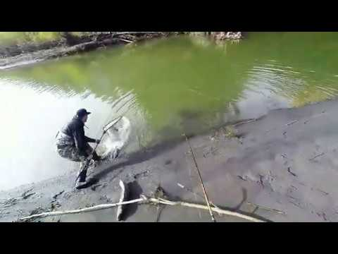 Fishing The Hoh River For Salmon With Parker Browning 11 07 2019