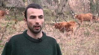 Casal produz gado de raça barrosã e plantas aromáticas - Celorico de Basto