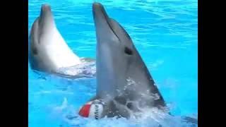 Шоу с дельфинами - отличный отдых 6