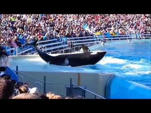 Travel Destinations and Vacation   San Diego California Attractions   Things To Do