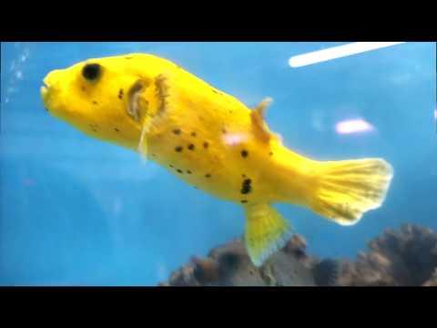 A visit to KHC Aquarium,  Queens New York