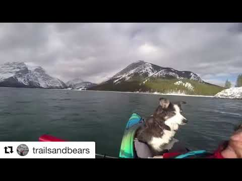 gopro-trip-through-banff-national-park-with-dog