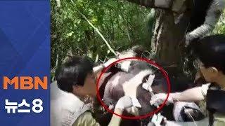 교통사고 반달가슴곰 앞발 부러진 채 발견…포획 성공