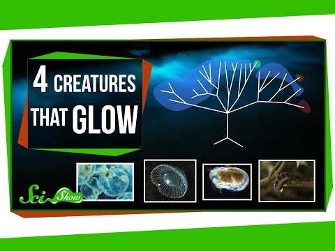 Four Creatures That Glow