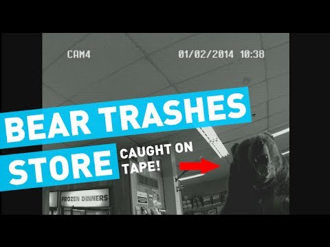 Grizzly Bear Trashes Convenience Store, Photobombs Camera