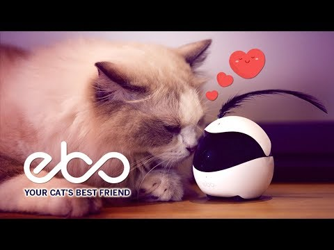 The Smart Robot Companion for Your Cat