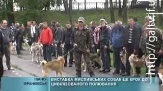 Виставка мисливських собак