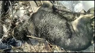 Мертвые собаки в Благовещенске