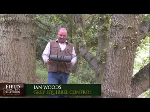 Practical Squirrel Trapping - www.greysquirrelcontrol.co.uk