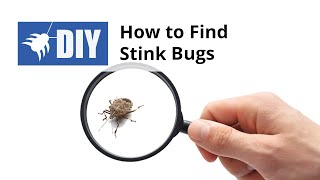 How to Find Stink Bugs