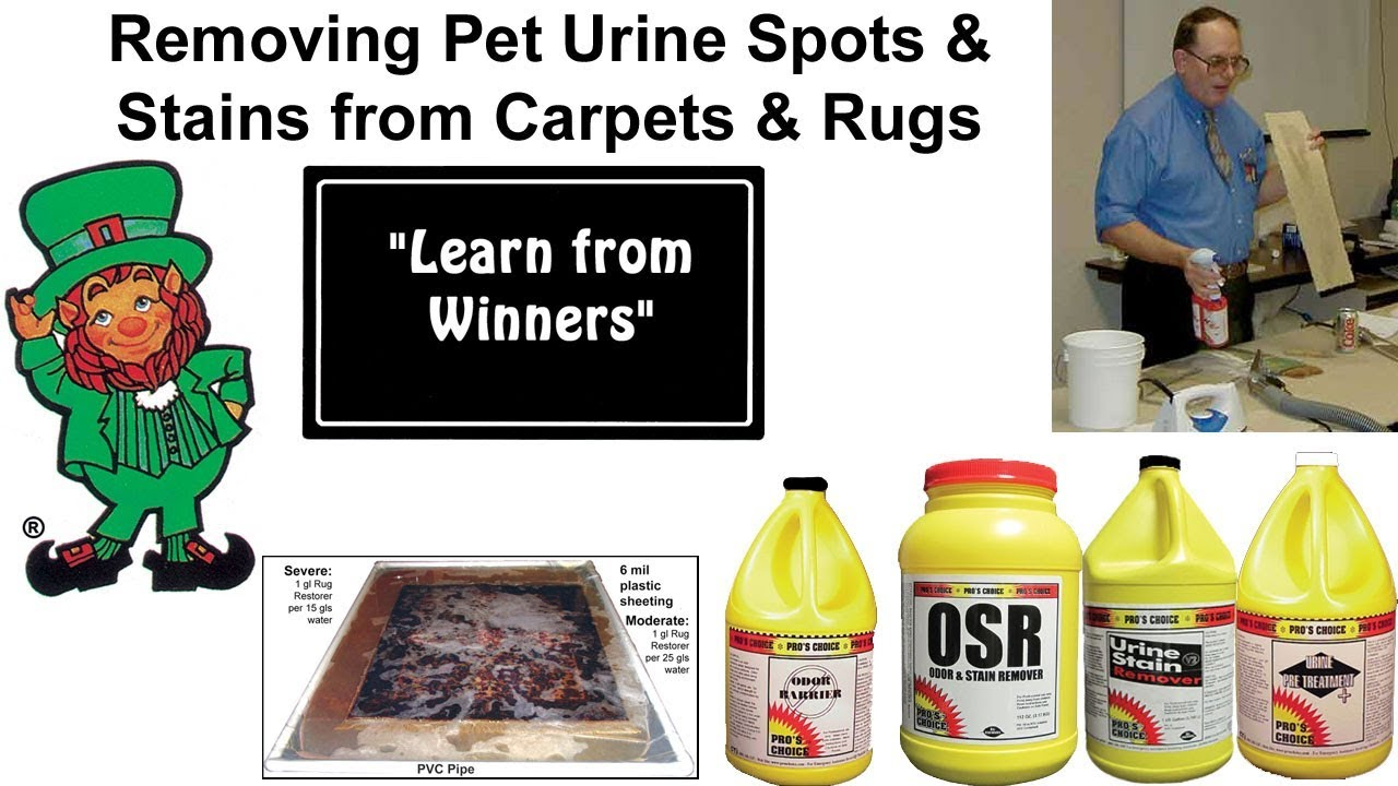 How To Remove Pet Urine Odors And Stains From Carpets Rugs
