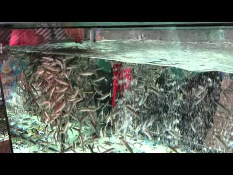 аквариумные рыбки оптом -