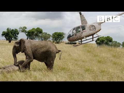 Elephants rescued by