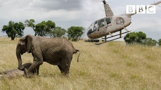 Elephants rescued by helicopter  - Equator from the Air - BBC