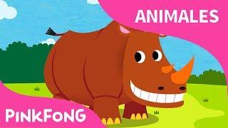 Rinoceronte Bailarín | Rinoceronte | Animales | PINKFONG Canciones Infantiles