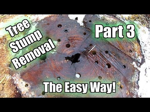 Possibly The Easiest Way To Remove A Tree Stump! Using Epsom Salt!! Part 3 | 6 Week Update!