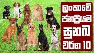 ලංකාවේ ජනප්රියම සුනඛ වර්ග 10   Most Popular Dog Breeds in Sri Lanka