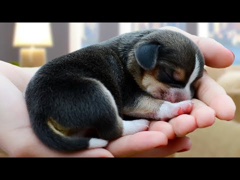 Cute And Funny Beagle Dog Compilation