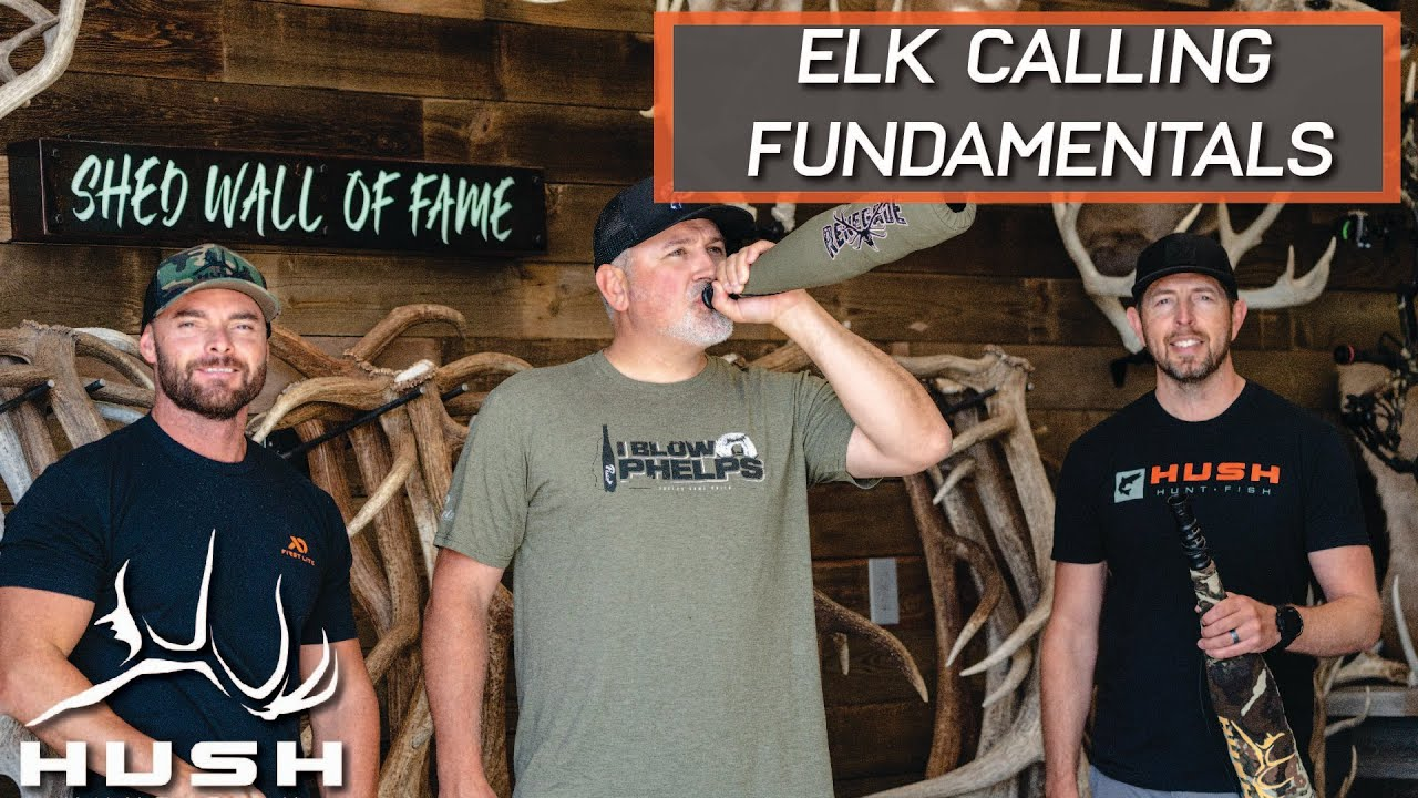 HOW TO CALL ELK | BEGINNER TO ADVANCED