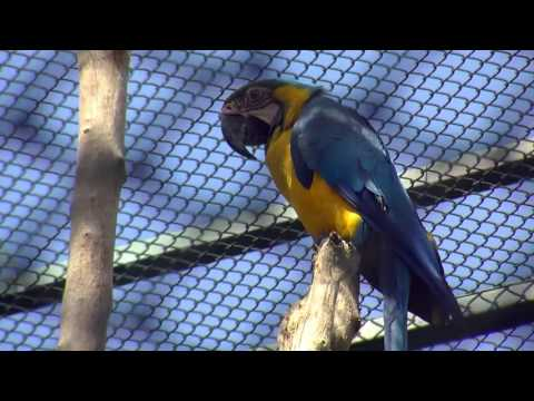 Illegal WildLife Trafficking in Colombia - English Language-