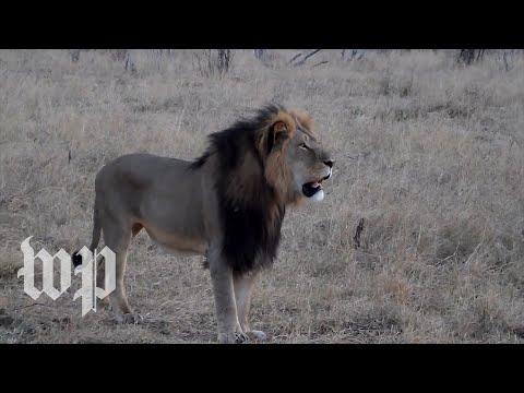 U.S. Hunters Stir Controversy With Overseas Kills