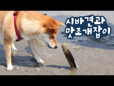 Find strange clams with dogs(+Eng sub)