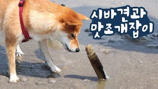 Find strange clams with dogs