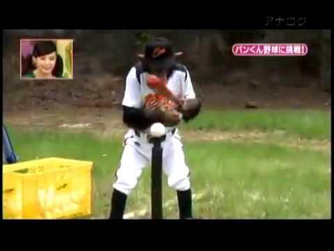 Monkey playing baseball - YouTube