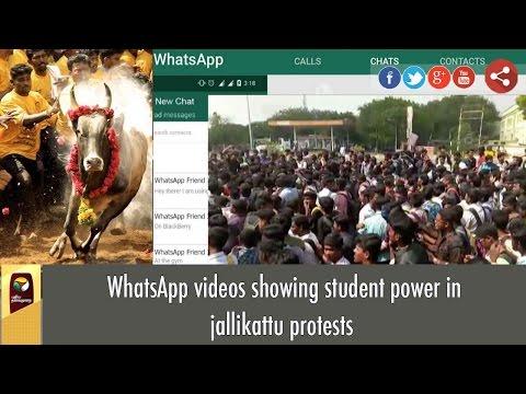 WhatsApp videos showing student power in jallikattu protests