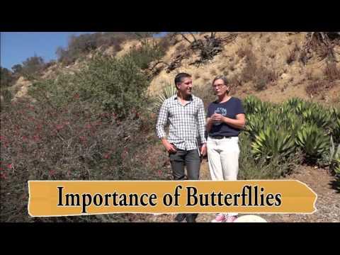 Part 1 of 4 |  GROWING CALIFORNIA NATIVES | Theodore Payne Foundation | Charles Malki & Lisa Novick