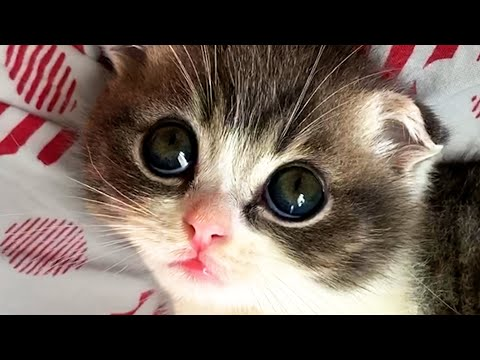 MUST WATCH CATS! Cute and Funny Cat Videos 😺