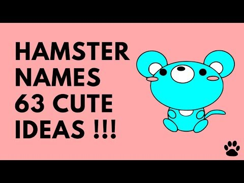 🐹 Hamster Names - 63 Cute Ideas !!! [Great List] | Names