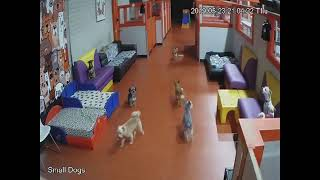 South Park Doggie LAX - Small Dogs Live Stream