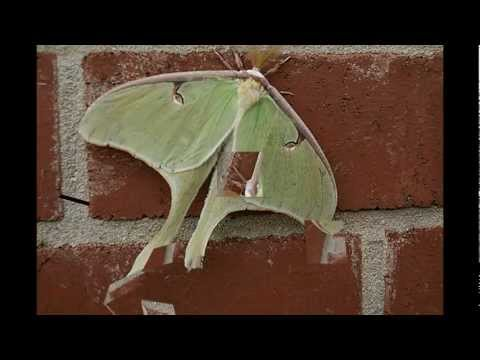 Spiders, Bugs, And Moths Oh My! - Youtube