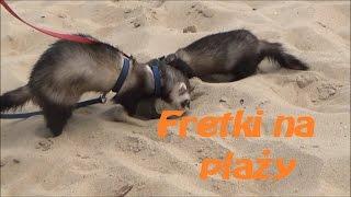 Fretki na plaży   KOPAĆ KOPAĆ KOPAĆ!