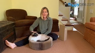 Cat Scratcher Lounge Bed Accordion Designed Product Review Video - ねこ - ラグドール - = ネコ - Floppycats