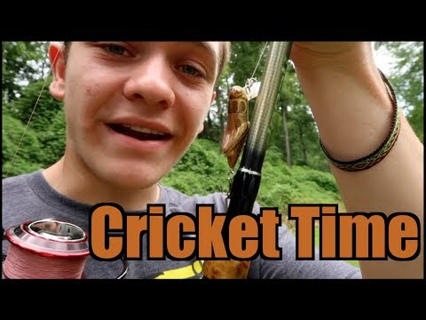 It's Cricket Time!