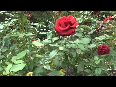 видео: Наш сад или ландшафтный дизайн своими руками