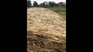 Dog Training   Belgian Malinois Jumping Hay Bales