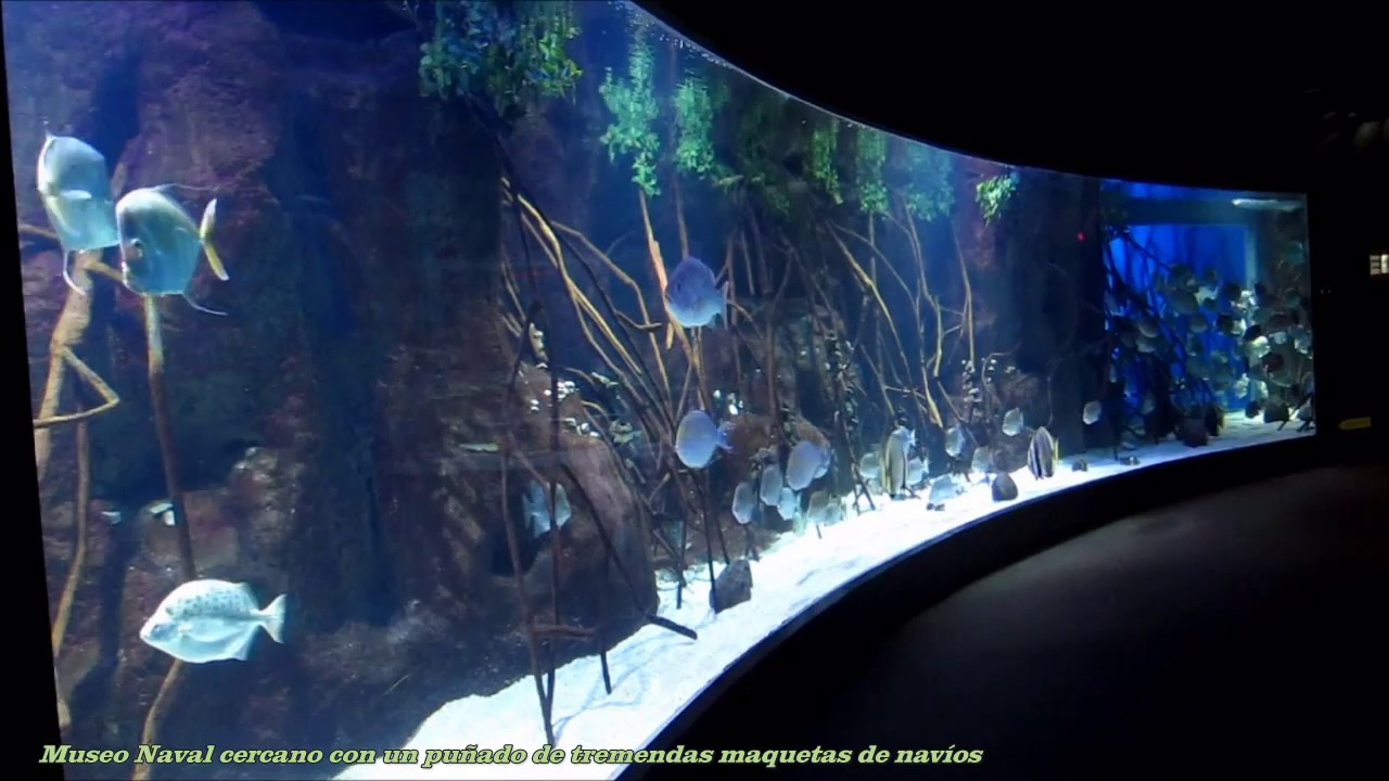 museo oceanogr fico aquarium de san sebasti n hd youtube. Black Bedroom Furniture Sets. Home Design Ideas