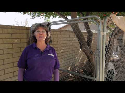 how-to-keep-the-dogs-from-digging-&-getting-out-of-the-pen-:-dog-behavior-&-training