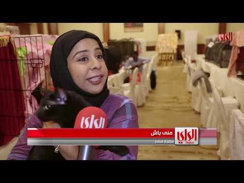 نادي قطط الكويت K-cat clup نظم cat show للمرة السابعة