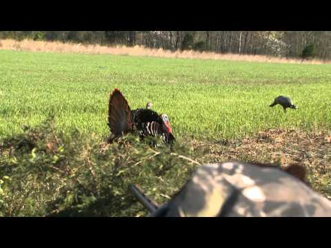 Blood Brothers Tv - Jeff Rutledge Too Close for Comfort Turkey Hunt