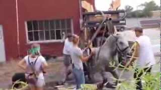 Carriage Horse Collapses In Downtown Salt Lake City Street