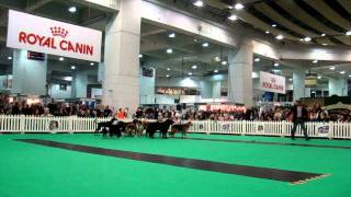 Dimadogs At Discover Dogs 2011