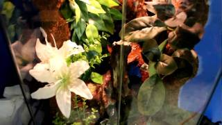 Yellow-Spotted Tree Frog Setup