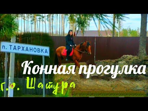 Конная прогулка в п. Тархановка (г.о. Шатура)