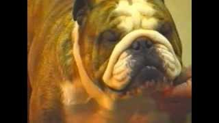 Bulldog Of The Year Uk 2001 Part 1